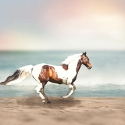horse galloping on beach